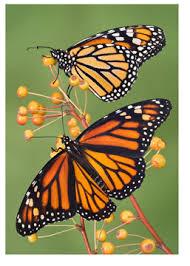 2012 11 05 regular class free form monarch butterfly