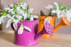 Small Decorative Vases Beautiful Snowdrops Flowers In Small Decorative Watering Can Vase