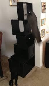 Modern Cat Tree Cat Tree Meow Hear This
