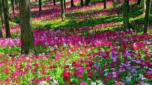 beautiful flower images download beautiful garden flowers design ultra com