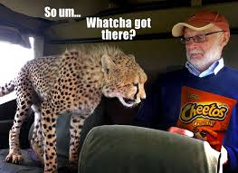 Cheetos Meme - cheetos cheetah cats know your meme