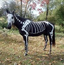 Animal Halloween Costume 95 Pet Costumes Images Animal Costumes Pet