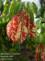 Tropical Rainforest Plant List - best 25 rainforest plants ideas on pinterest plants of the