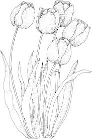 four tulips coloring page coloring page pinterest