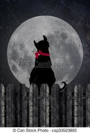 black cat staring at moon black cat on a wooden fence stock