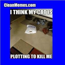 Funny Stalker Memes - cat stalker clean memes