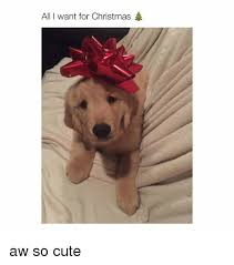 Cute Christmas Meme - all i want for christmas aw so cute christmas meme on me me