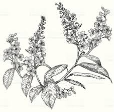 sketch of spring flowers stock vector art 510441861 istock