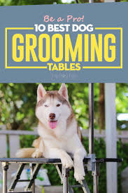 go pet club grooming table electric motor top 10 best dog grooming tables for home or salon in 2017