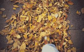 Why Fall Is The Best Season 15 Reasons Why Autumn Is The Best Season Metro News