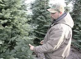 Pacific Northwest Christmas Tree Association - christmas tree prices expected to rise amid shortages local news
