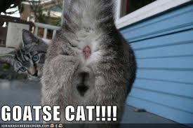 Goatse Meme - goatse cat cheezburger funny memes funny pictures