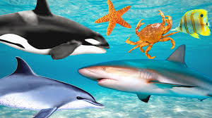 learn sea animals names and song for children youtube