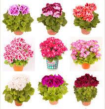 Beautiful Indoor Plants Popular Beautiful Indoor Plants Buy Cheap Beautiful Indoor Plants