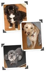 dog sitting dog sitter dog daycare dog care pricing and plans