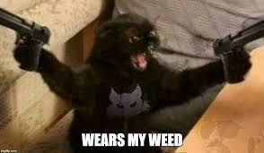 Angry Meme Cat - image tagged in angry cat imgflip