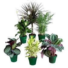 types of indoor plants plants florist types of indoor plans ideas