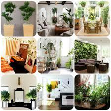 livingroom indoor tree plants air purifying plants big indoor