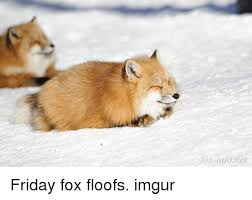 Meme Fox - fox infoner friday fox floofs imgur friday meme on me me