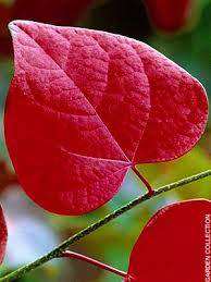 autumn leaves from ornamental trees telegraph