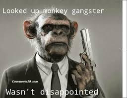 Gangster Meme - monkey gangster meme by hattie hattington memedroid