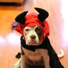 Dogs Halloween Costumes Pictures Cute Animals Halloween Costumes Popsugar Pets