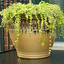Plants For Patios In The Shade Potted Trees For A Beautiful Porch