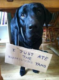 thanksgiving dog 14 more thanksgiving dog shaming pictures to make you want to