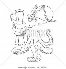 cunning octopus pirate cocked hat vector u0026 photo bigstock