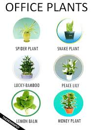 Plants For Office Low Maintenance Plants For Office 7 Best Low Maintenance Plants
