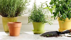 Winter Indoor Garden - indoor garden ideas to try this winter