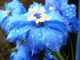delphinium flowers the 25 best delphinium flower pictures ideas on