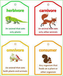 art and crafts carnivores herbivores omnivores google search
