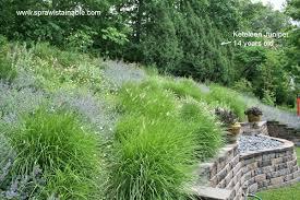 Steep Hill Backyard Ideas Backyard Terraced Front Yard How To Landscape A Steep Hill