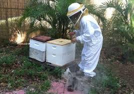 Backyard Beehive New Law Removes Local Control Of Backyard Beekeepers Wgcu News