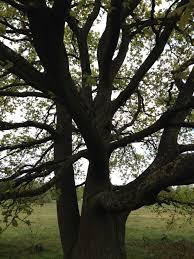 the symbolism of trees in u0027ignoring gravity u0027