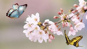 100 picture of flowers and butterflies and butterflies 21