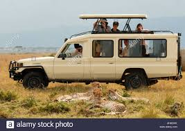 toyota national toyota landcruiser close to family of cheetah in the masai mara