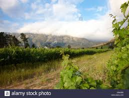 dutch colonial style house vineyard in franschhoek south africa with dutch colonial style