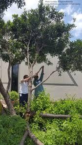 october 2016 central texas gardener