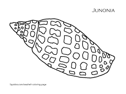 printable pictures of sea shells at shell coloring pages omeletta me