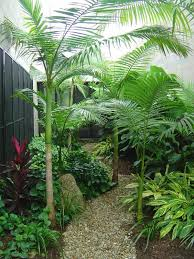 Small Tropical Garden Ideas Small Tropical Plants For The Garden Best 25 Small Tropical