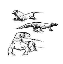pencil sketch komodo dragon coloring pages download u0026 print