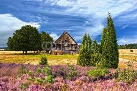 Heideblüte in der Lüneburger Heide von Gabriele Rohde ... - 400_F_36473272_7ao8vwkflloEDPXPmUOnXBfWEFqk8qZ6