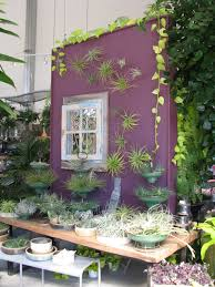 Plants That Don T Need Water Air Plants U2013 The Extreme Horticulturist