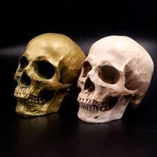 Halloween Skeletons Life Size by Online Buy Wholesale Human Skull From China Human Skull
