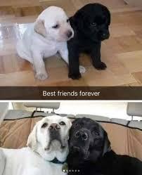 Friends Forever Meme - best friends forever meme xyz