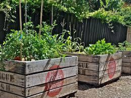 best 25 veggie gardens ideas on pinterest raised gardens