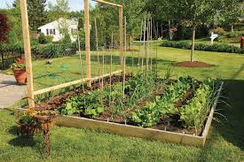 backyard vegetable garden design with regard to backyard vegetable