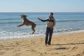 boxer dog breeders near me 12 dog breeds with houdini like escape artist skills barkpost